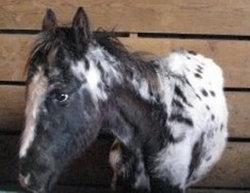 Emmitt The Horse