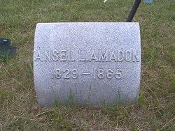 Ansel Lyman Amadon