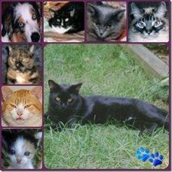 Moochard Moochie <i>Cat</i> Kagarise