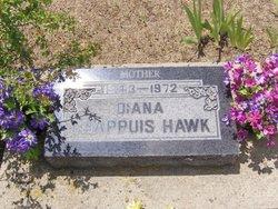 Diana <i>Chappuis</i> Hawk