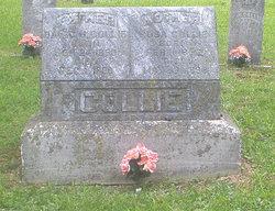 David Holloway Collie