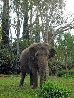 Taj <i>Discovery Kingdom</i> Elephant