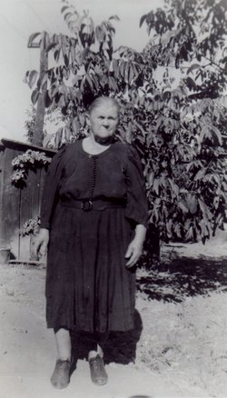 Ida Harrol <i>Shinn</i> Countz