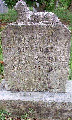 Daisy Rae Ambrose