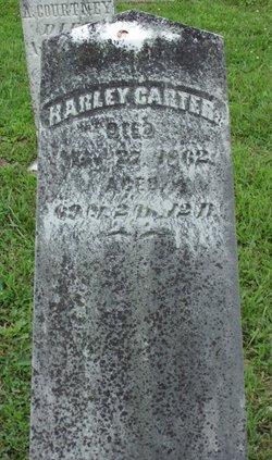 Harley Carter