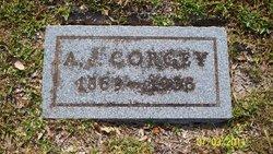 Andrew Jackson Jack Corgey