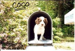 Coco Moco Pacitti