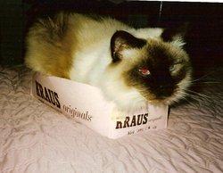 Baby cat Eagan