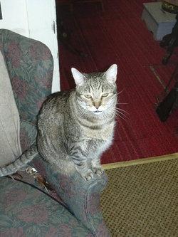 Leon That Cat Klette