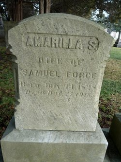 Amarilla S. Emily Force