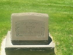 Lily <i>Thomas</i> Bush