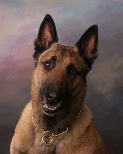 Bandit K-9 Dog