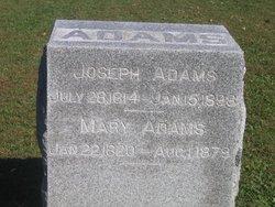 Mary <i>Tracy</i> Adams