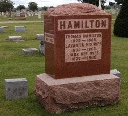 Lavantia <i>Randall</i> Hamilton