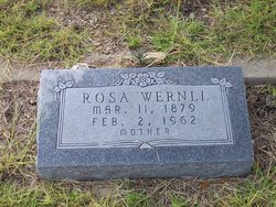 Rosa <i>Brogli</i> Wernli