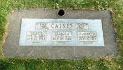 Olive India <i>Buckmaster</i> Caines