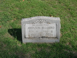 Johnson Bluebird