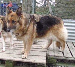Sheena The Dog