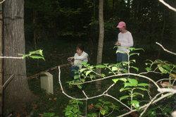 Alvis Cemetery #4(Rt 670)