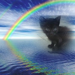 Little Jack (Kitten)