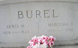 Marcenia <i>Tullis</i> Burel