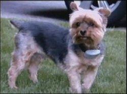 Cody The Dog