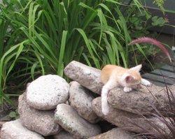 Skittles kitty