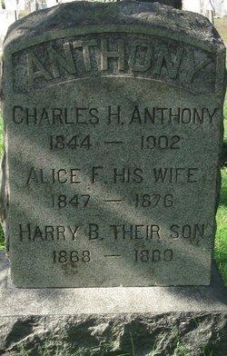 Alice F Anthony