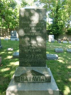 Rose <i>Bergman</i> Batavia