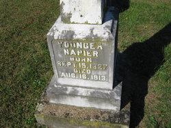 Youngea Napier