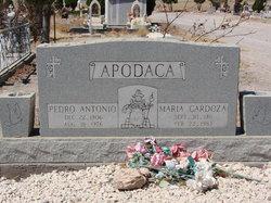 Maria Cardoza Apodaca