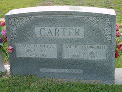 Sallie Florence <i>Ashworth</i> Carter