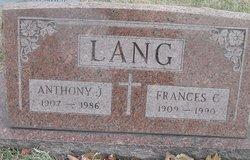 Anthony J Lang