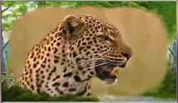 Bella Leopard