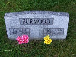 Viola <i>Sikes</i> Burmood