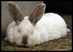Mischief The Rabbit