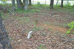 Erskine Family Cemetery
