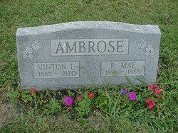 Phoebe Mae <i>Crissinger</i> Ambrose