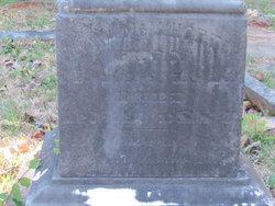 Rev William David McWhorter