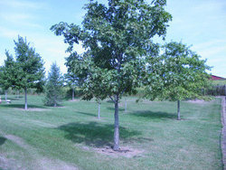 Swedona Lutheran Cemetery