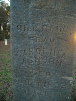 Carolina Ashorn