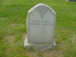 Rosa <i>Fortannascere</i> Radice