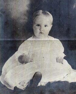 Violet Viola <i>Buchanan</i> Eury