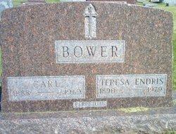 Teresa M <i>Endris</i> Bower