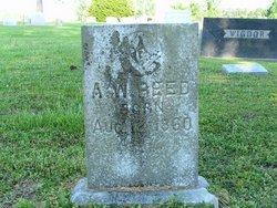 A. W. Reed