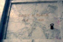 Daisy A Black