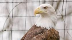 Barbara The Eagle