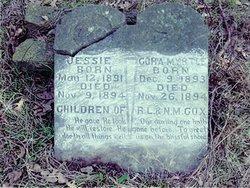 Jessie Cox