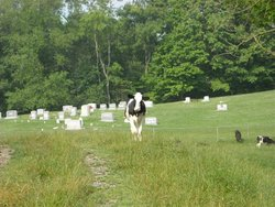 Boyd Cemetery (Jonathans Creek)