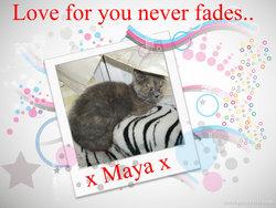 Sweet Maya Marcotte